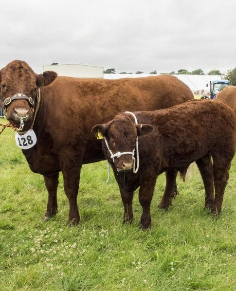 Derbyshire County Show 2017