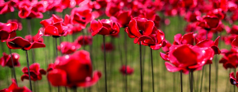 Poppies are coming to Derby
