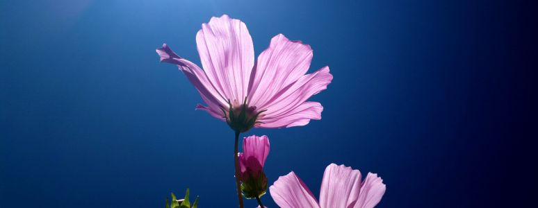 Flower and blue sky